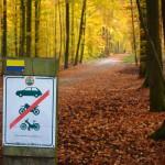 Soignes Forest, Tervuren